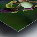 Passion Flower In Purple Metal print