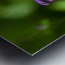 Purple Columbine 2 Metal print