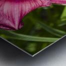 Purple Stella Doro Day Lily Flowers 2 Metal print