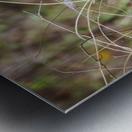 Angry Mockingbird 2 Metal print