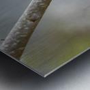 Yellow-rumped Warbler 4 Metal print