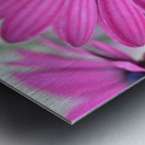 Purple Flower Photograph Metal print