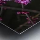 Pink Trees Metal print