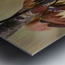 Blackburnian Warbler In Maple Tree Metal print