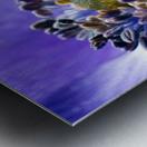 Blue Flower Anemone Close-up Macro Metal print