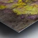 outdoor nature natural woods Metal print