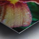 Eye of the tiger lily Metal print