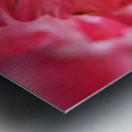 Rose Bud On My Petals Metal print