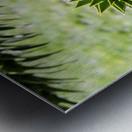 Plant Image Metal print