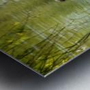 Cygnets Metal print
