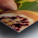 Blush Orchids Metal print