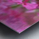 Pink Flowers Photograph Metal print