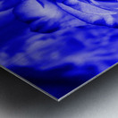 Rose blue Metal print