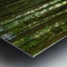 Redwood National Park Metal print