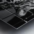 Leopard in Black & White Metal print