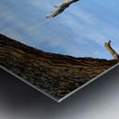 Driftwood Beach Uplifting Metal print