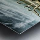 Driftwood Beach Panorama 103 Blackgold Metal print