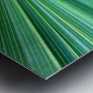 Spreading the Green Metal print