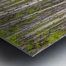 Aspens In Banff National Park Metal print