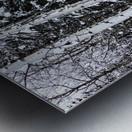 Aspens Snow Blanket Banff National Park Metal print