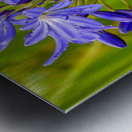 Close up of purple flowers Metal print