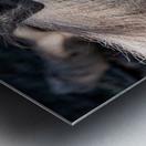 Warthog Close Up Metal print