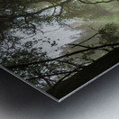 Clearing in the Woods Metal print