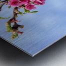 Tree XIII - Cherry tree Metal print