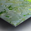 Cool White Lilac On Lemon Lime Metal print