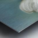 White Dogwood with Leaf Metal print