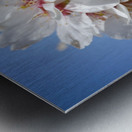 Flower Mix 09 Metal print