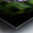 Beeplant Metal print