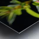 Gorgeous Flower Color Metal print