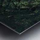 Path in the Woods Metal print