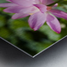 Lots bud with blooming lotus flowers behind Metal print