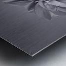 Dahlia Flower Metal print