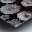 Dahlia Flowers, Full Frame Metal print