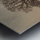 Trees in grass fields Metal print