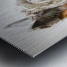 Close-up of Alpaca Metal print