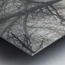 Pathway through trees Metal print