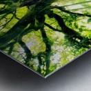 Ponthus Beech by Christophe Kiciak  Metal print
