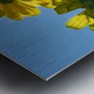 Summer Sky Flowers 8 AUG 2020 Metal print