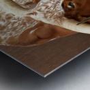 Longhorn Steer Profile 7x5 Metal print