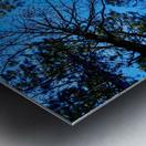 Towering Trees Bright Blue Sky Metal print