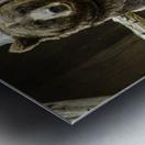Greetings  Brown Bear  Metal print