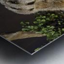Take Watch  Meerkats  Metal print