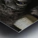 Reflection of a Buffalo Metal print