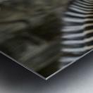 Stripes  Zebra  Metal print