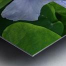Refreshing Nature Metal print