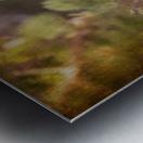 Male Pine Grosbeak Metal print
